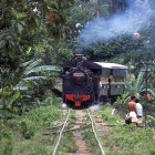 Steam in the jungle